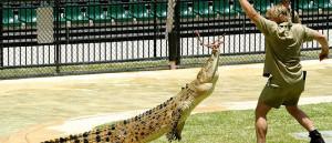 Australian Zoo Wildlife Park