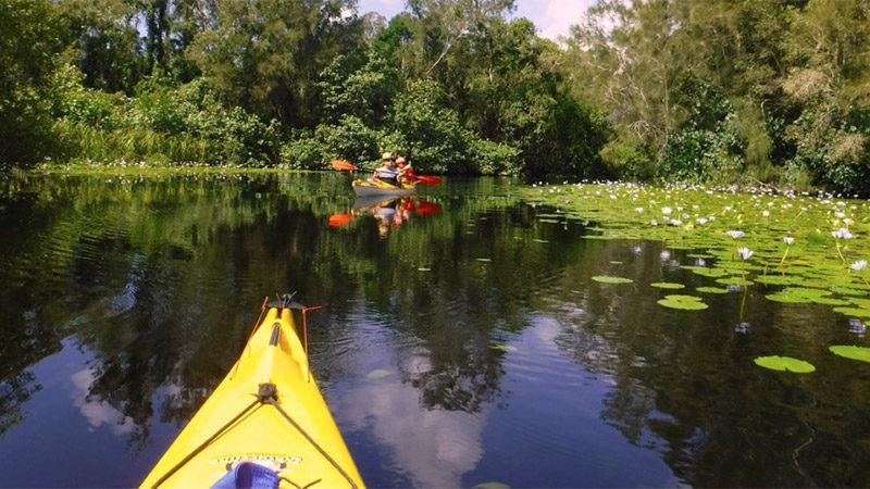 Kanu Kapers Noosa Everglades