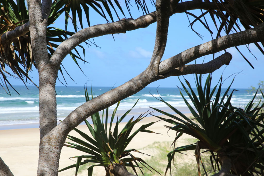 castaways beach accommodation view