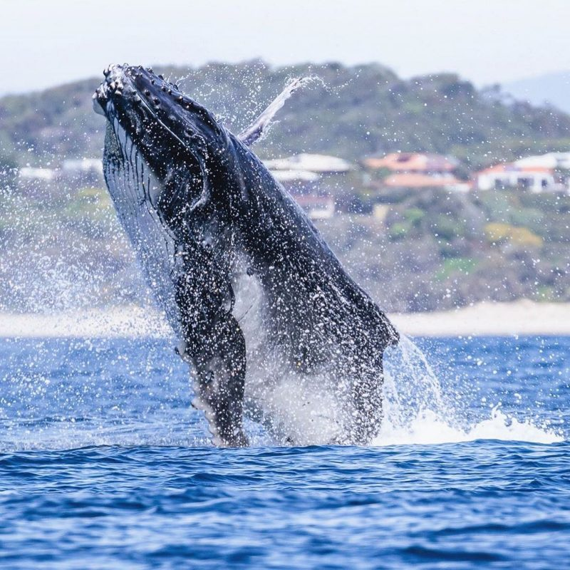 On your doorstep – Experience exciting Noosa tours