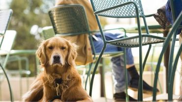 Noosa's pet-friendly cafes