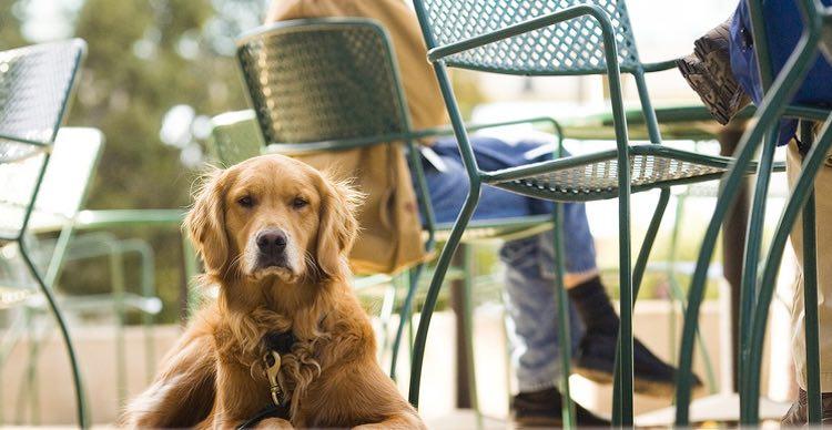 Noosa's pet-friendly cafes