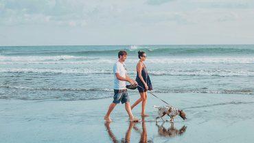 Dog-Friendly Parks & Beaches
