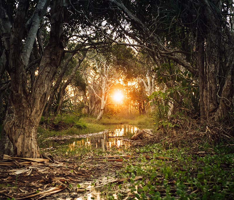 Noosa is for nature lovers